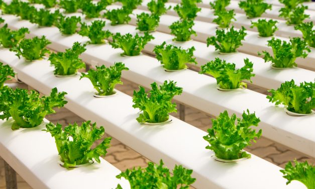 Which hydroponics systems classifications exist?