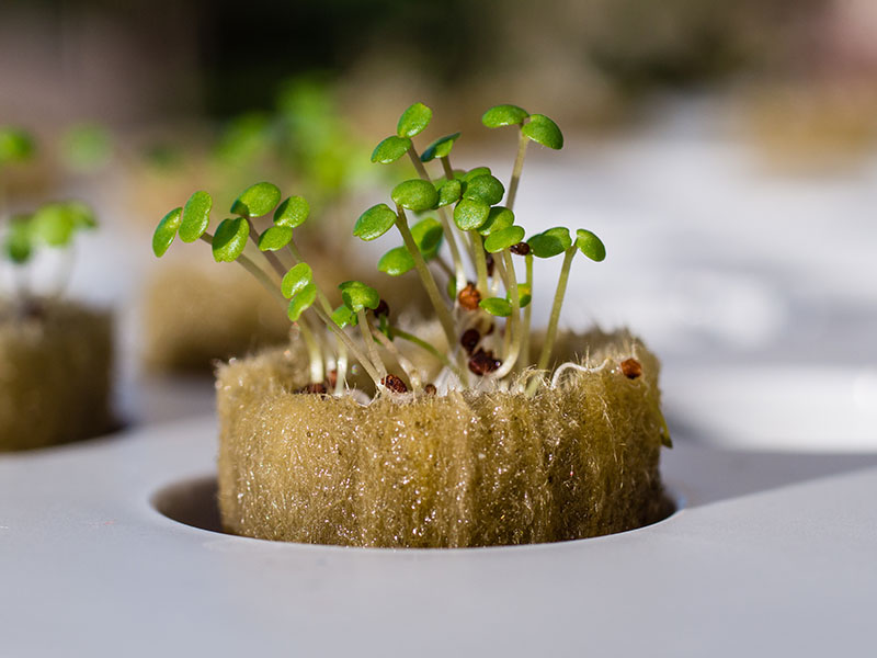 Growing your plants with hydroponics. What to consider?